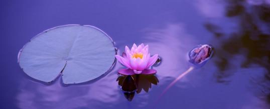 7 e 8 gennaio Inizio Corso di Meditazione in 12 lezioni